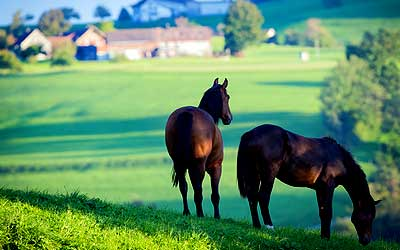Farm-horse-property